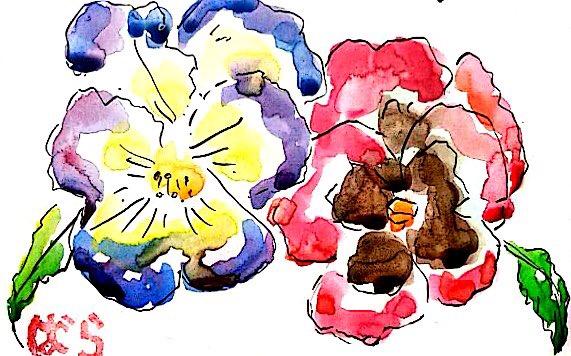 青と赤のパンジーの花