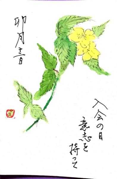 卯月十二日 入会の日 意志を持って 〜黄色山吹の花〜