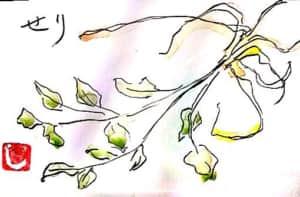 春の七草、セリ