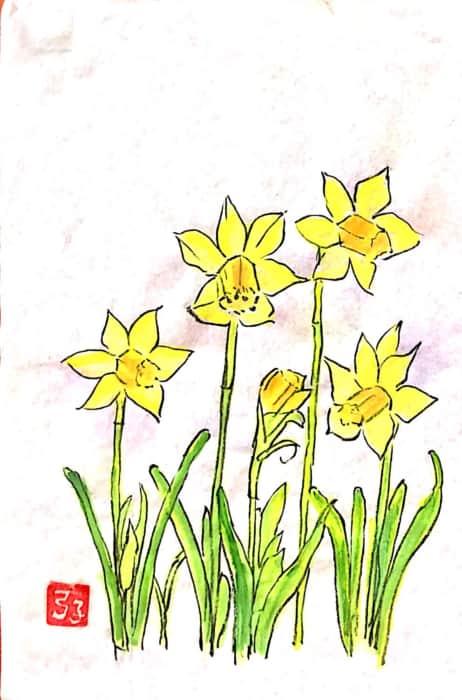 黄水仙の花々