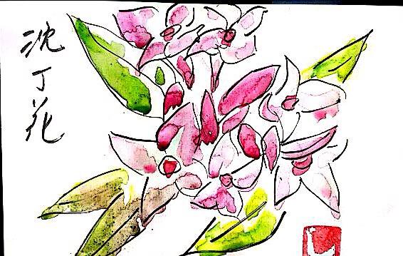 沈丁花の花