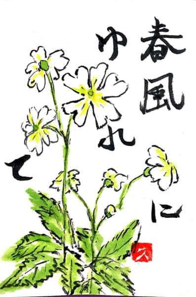 春風に揺られて 白い桜草の花