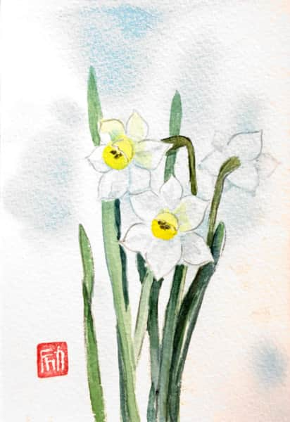 白い水仙の花