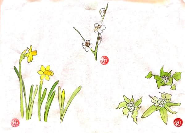 黄水仙と梅の花とふきのとう、春の御三家