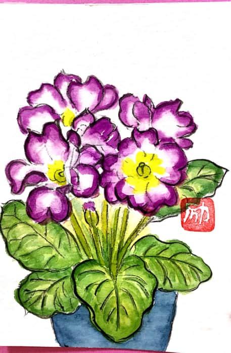 紫のプリムラジュリアンの花