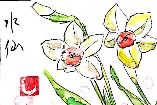 白と黄色の水仙の花