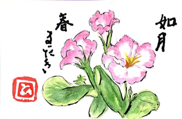 如月 春まだき プリムラジュリアンの花