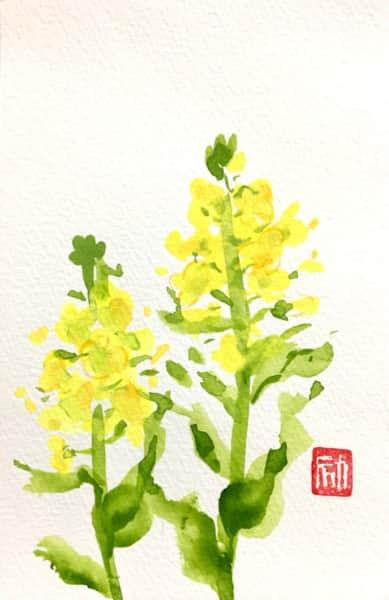並んだ菜の花