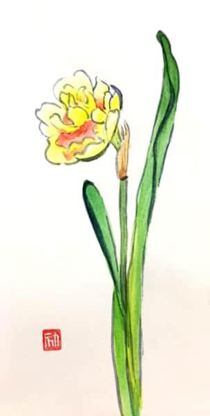 黄色い八重咲き水仙の花