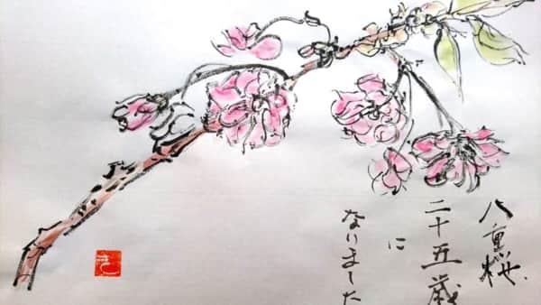 八重桜 二十五歳になりました