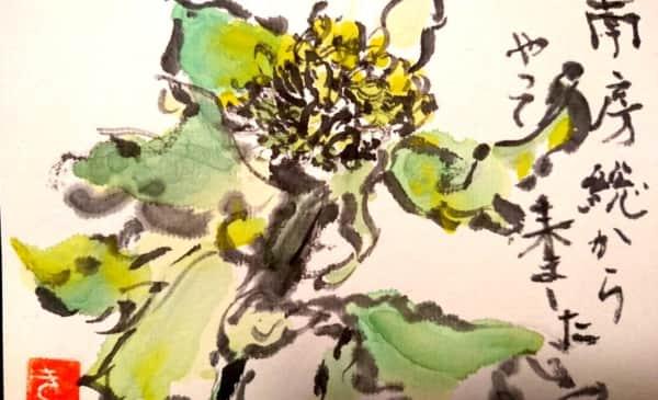 南房総からやってきた菜の花
