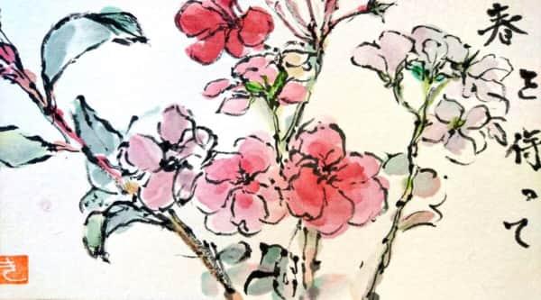 春を待つゼラニウムの花