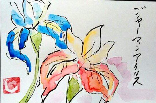 青と赤のジャーマンアイリスの花