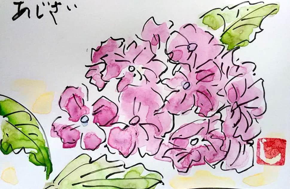 赤紫色の、あじさいの花