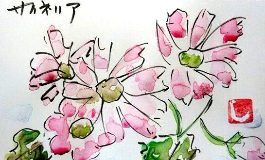 ピンクのサイネリアの花