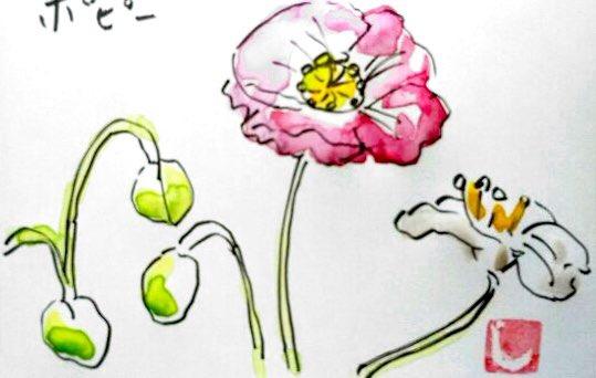 ピンクと白のポピーの花