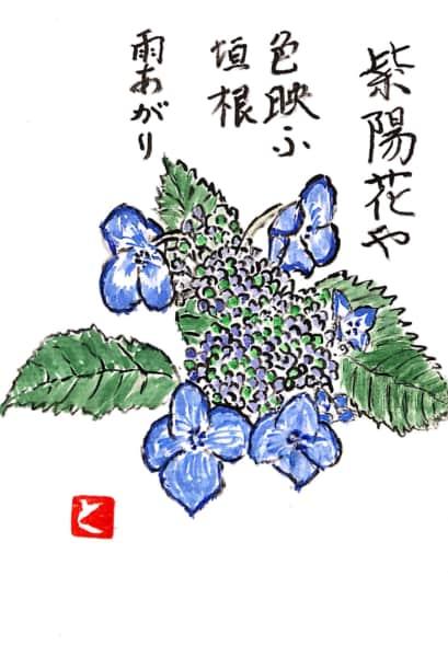 紫陽花や色映ふ垣根雨上がり