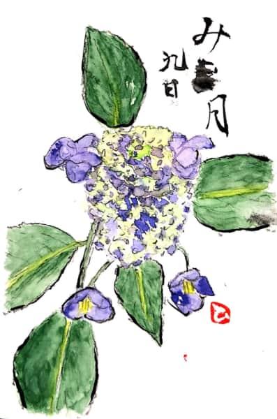 水無月九日 あじさいの花