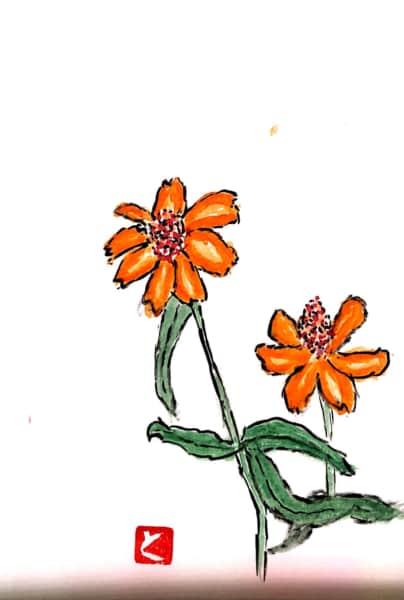 オレンジ色の百日草、ジニアの花
