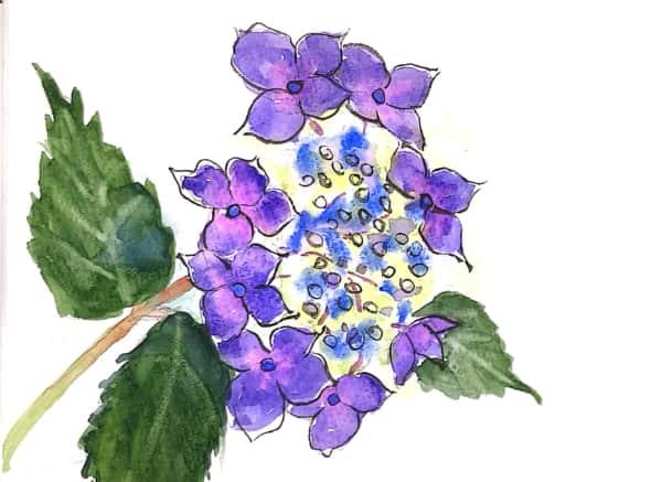 紫の あじさいの花
