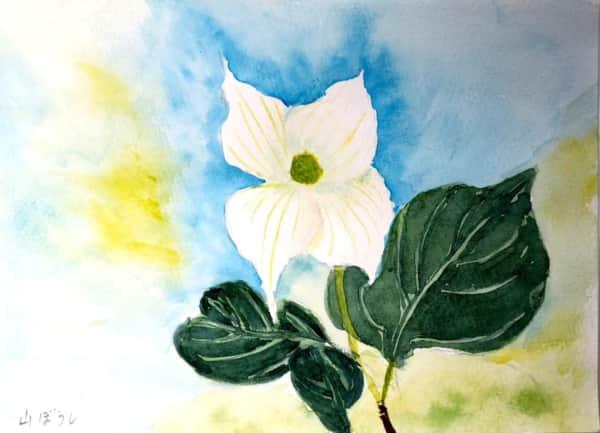 白いヤマボウシの花
