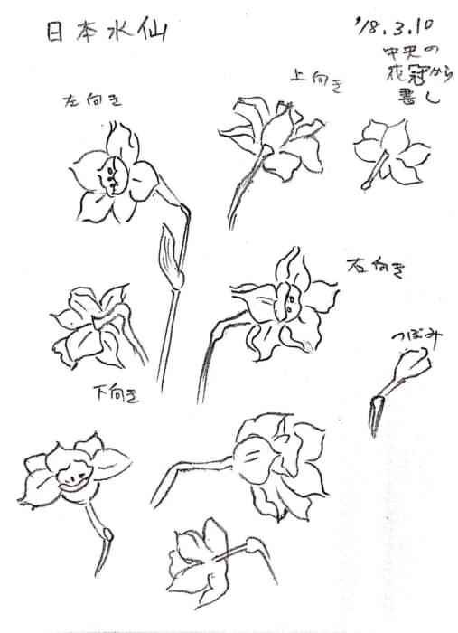 水仙の花の描き方