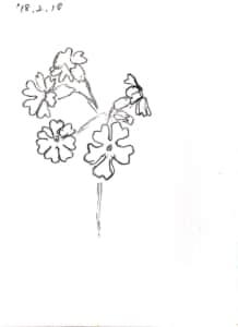 桜草の花のデッサン