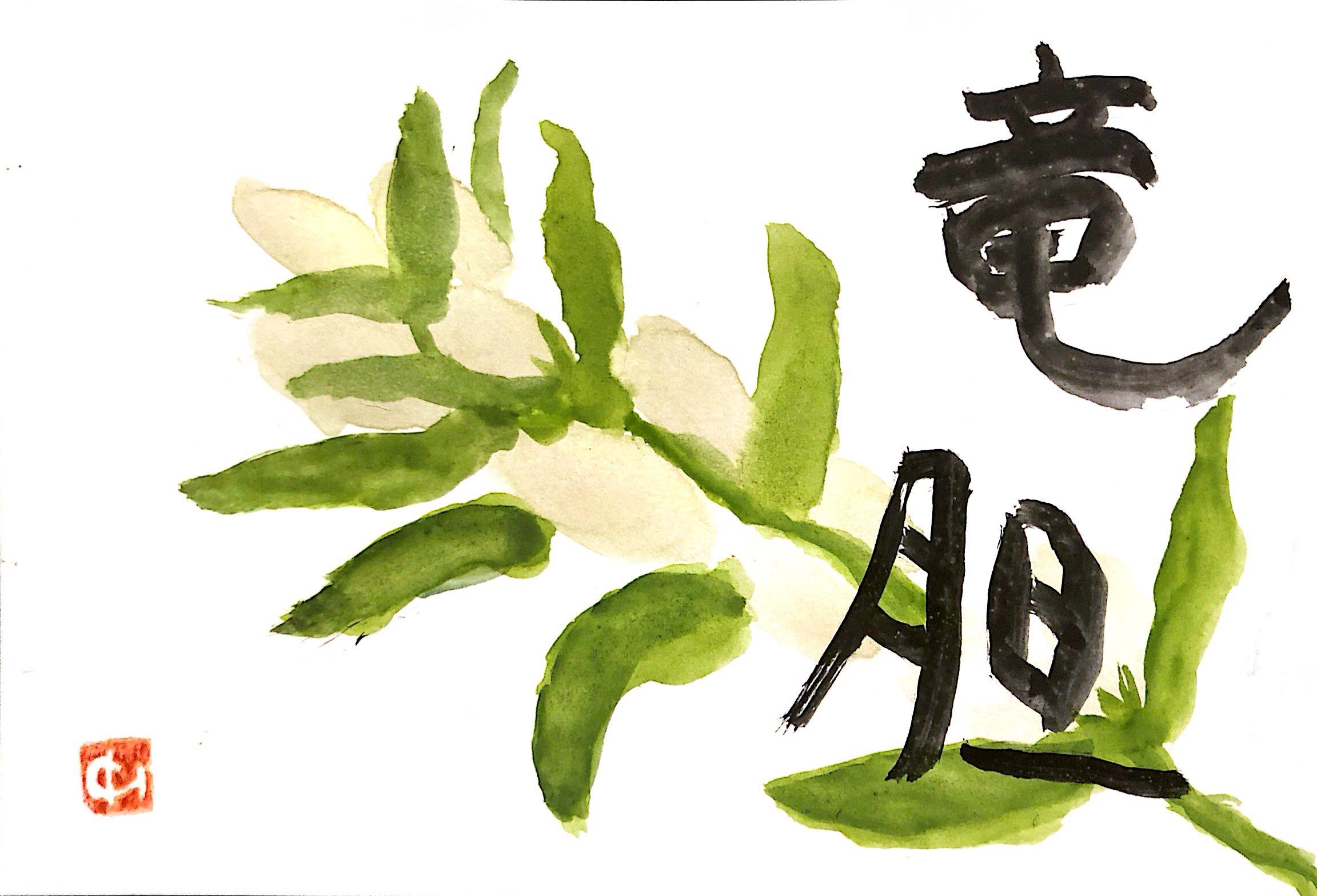 白いリンドウの花