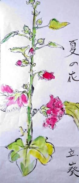 夏の花、タチアオイ