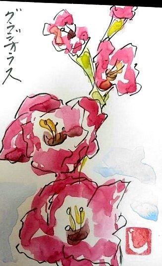七夕のグラジオラスの花