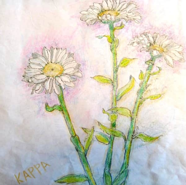 白いマーガレットの花