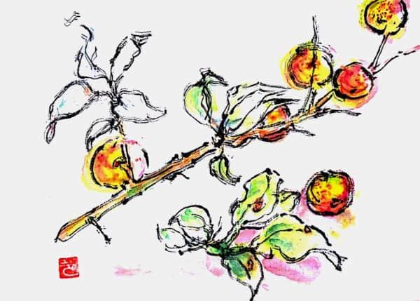 赤く色づいた梅の実