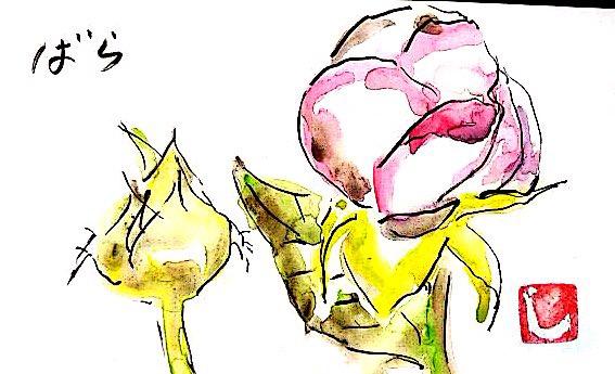ピンクのバラの花とつぼみ