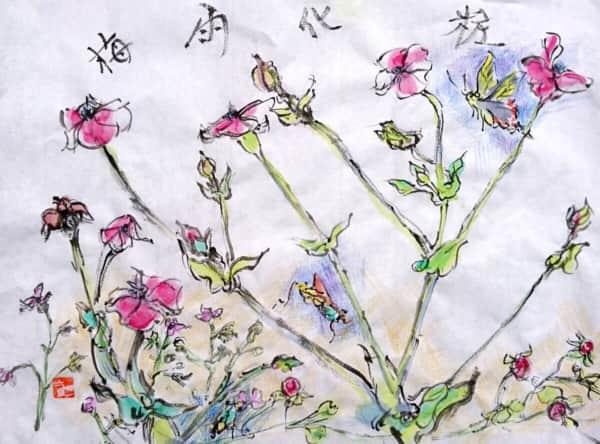 梅雨化粧 〜フランネルソウの花〜
