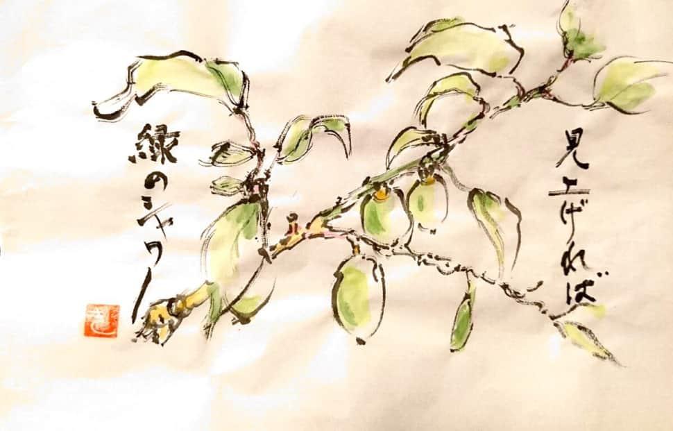 見上げれば緑のシャワー、梅の実