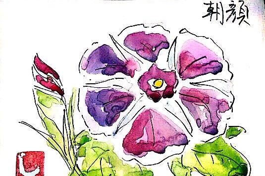 紫の朝顔の花
