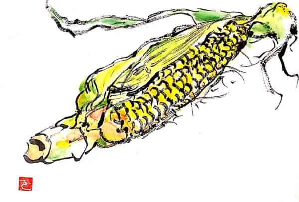 夏のトウモロコシ