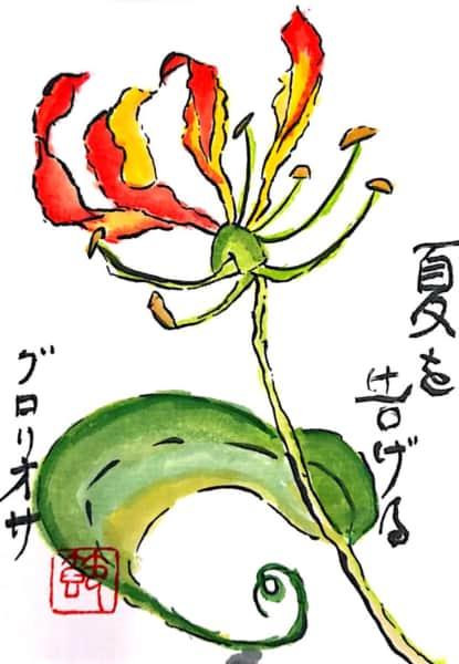 夏を告げるグロリオサの花