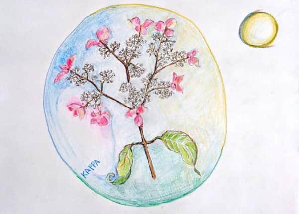 月と地球、紫陽花の花