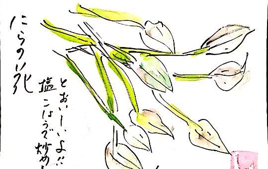 ニラの花 塩コショウで炒めるとおいしいよ!!