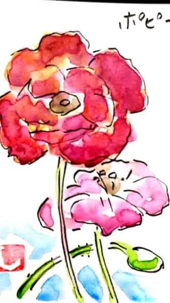 赤とピンクのポピーの花