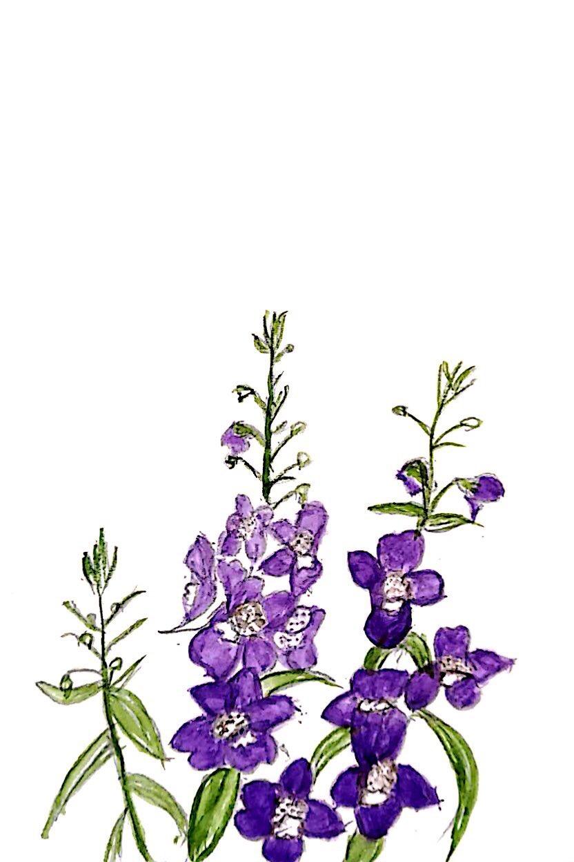 紫色のスミレの花