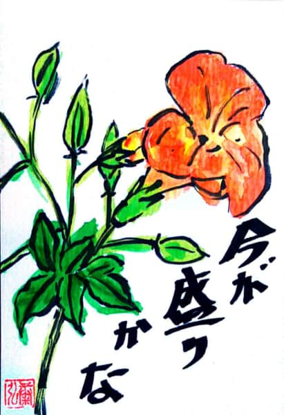 今が盛りかな ノウゼンカズラの花