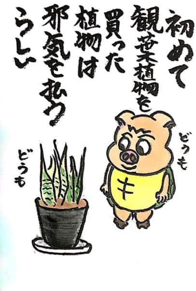 初めて観葉植物を買った 植物は邪気を払うらしい