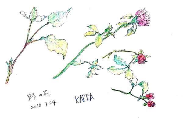 クローバー、野いちご、どくだみ。野の花の絵手紙