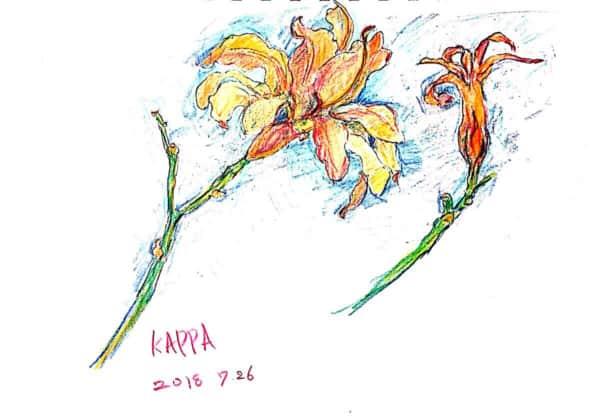 ノカンゾウ(ワスレグサ)の花