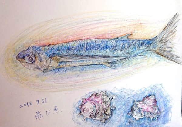 トビウオとサザエ貝