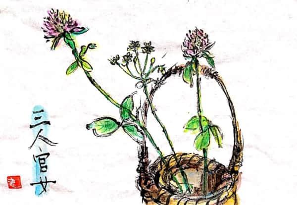 三人官女 〜ニラとクローバーの花〜