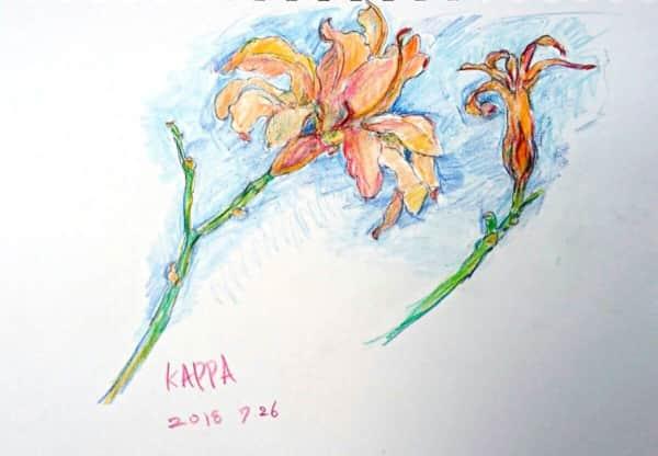 オニユリの花