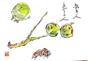 熟さずに落ちた青い柿の実、胡桃そしてセミの脱け殻みんな季節の旅人。